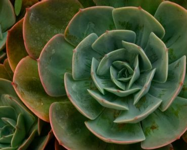 11 Plants That Will Radiate Positive Energy Inside of Your House