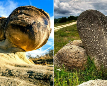 """""""Trovants"""" The Mysterious Living Stones Of Romania: They Actually Move, Grow And Multiply!"""