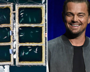Russia Order To Release Orcas And Belugas From 'Whale Jail' With Help Of Leonardo DiCaprio