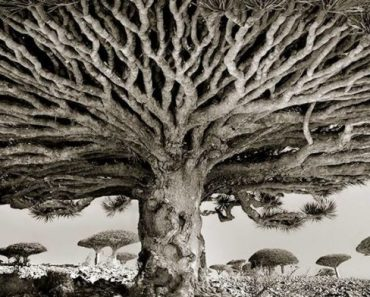 Woman Photographed Ancient Trees All Over The World For 14 Years