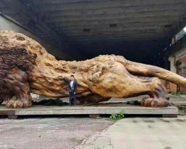 Giant Lion Carved From A Tree Is The World's Largest Redwood Sculpture