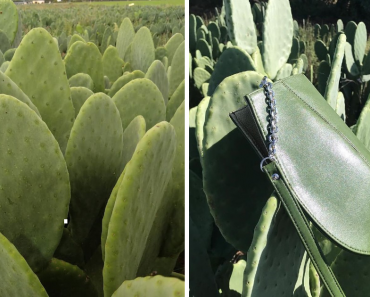 Two Mexican Guys Created Vegan Leather From Cactus