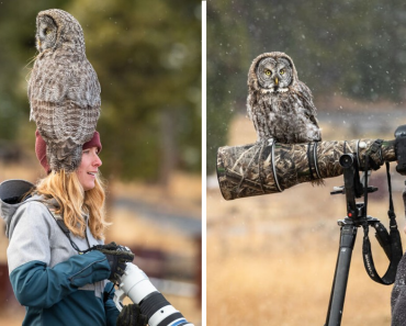 Owl Lands On This Photographer's Lens, Ends Up Blending In Perfectly