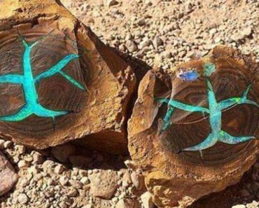 Rare Petrified Wood With Turquoise Opal On The Inside Discovered in Australia