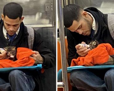 Man Spotted Feeding A Kitten On Subway: Kindness Makes World Beautiful