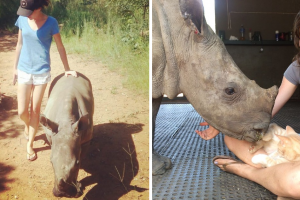 Adorable Baby Rhino Became Friends With Her Rescuer's Cat