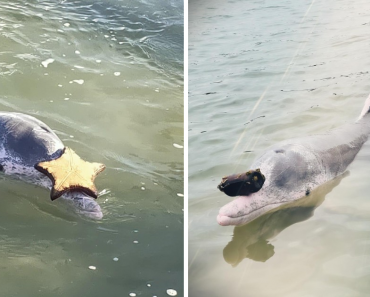 Adorable Humpback Dolphin Gets Gifts From The Bottom Of The Ocean To Receive Food In Exchange