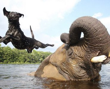 Friendship Between Elephant and Dog Who Love Playing in the Water