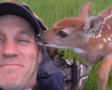 Baby Deer Doesn't Want To Leave The Man Who Saved Her