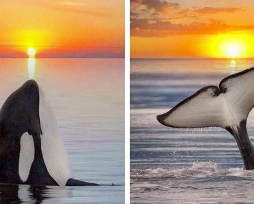 Photographer Created A Dreamy Escapism With Stunning Stitched Images Of Orcas And Sunsets