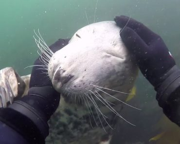 Diver Meets A Friendly Seal Who Gets Playful With Him