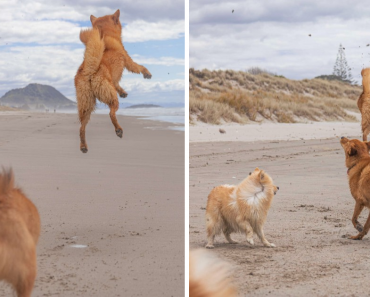 Dog Loves The Beach So Much She Can't Stop Jumping For Joy