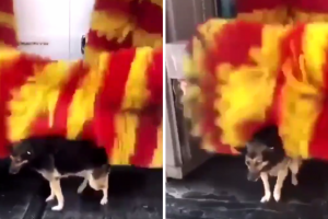 Stray Dog Uses Car Wash As A 'Petting Machine'