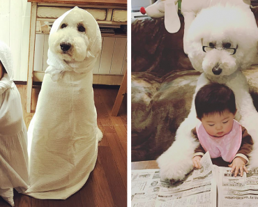 This Little Japanese Girl And Her Pet Poodle Are Best Friends