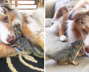 Stewart The Squirrel Loves To Cuddle With His Best Buddy