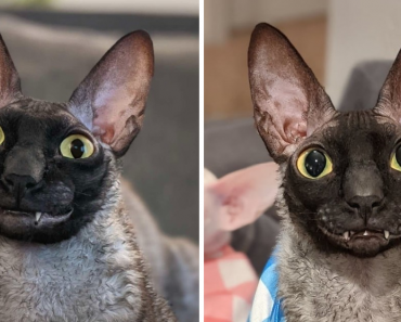 Meet Pixel – The Adorable Fuzzy Cat With A Nice Smile